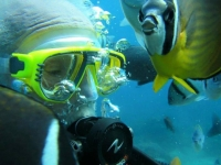 Green Island Diving - underwater world-2